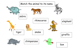jungle animals printable worksheets animal flashcard snake