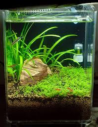 nano aquascape 1 5 gallon nano singapore grass scene