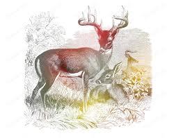 deer home decor colorful deer wall art print deer home decor 8 x 10 print