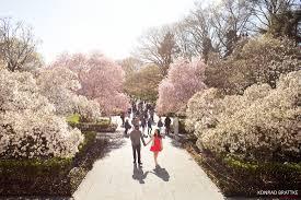 brooklyn botanic garden photoshoot bk photographer