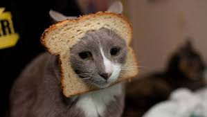 Cat In Bread Meme - 10 of the web s most popular cat memes mnn mother nature network