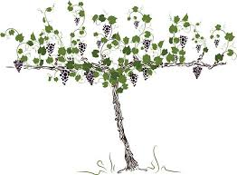 vine tree clipart collection