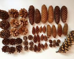 set of pine cones christmas ornaments pine cones decor