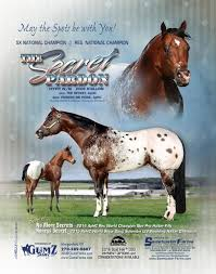 sweetwater farms quality appaloosa horses since 1979