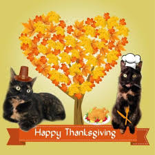 happy thanksgiving the conscious cat