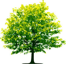 tree four isolated stock photo by nobacks