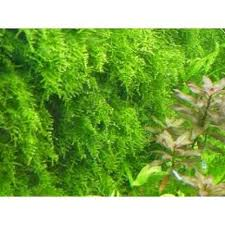 moss liverworts ecommerce shop online business from coimbatore