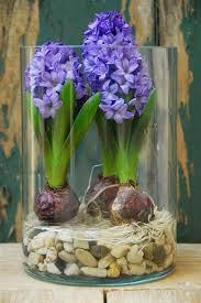 Indoor Plant Arrangements Best 25 Indoor Flowers Ideas On Pinterest Indoor Flowering