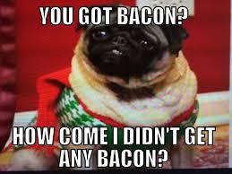 Sad Pug Meme - sad pug meme bacon funny humor lol pugs pinterest pug meme and