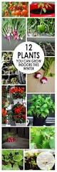Winter Indoor Garden - best 25 growing vegetables indoors ideas on pinterest growing