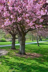 foap com cheryl blossom tree dc ozzy irizarry 5 cherry