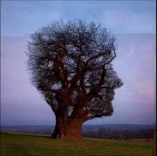 looking trees that you never thought exist amazing world of