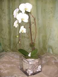 Westwood Flower Garden - 63 best white phalaenopsis images on pinterest phalaenopsis