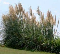 the disadvantages of inorganic fertilizer grasses late summer