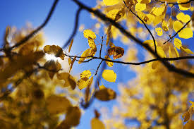 20 colorado hikes for spectacular fall color u2014 the know from the