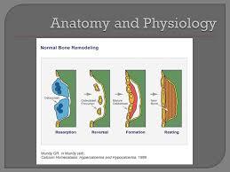 Normal Bone Anatomy And Physiology Stephanie Kimbrel Diane Morris Heather Sloan Osteitis