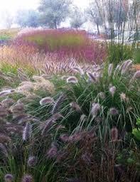 4060848306 51e6fe55a8 o grass gardens sensory