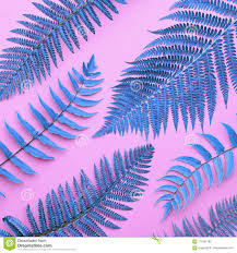 Free Picture Leaf Nature Fern Tropical Fresh Blue Fern Leaves Nature Background Stock Photo