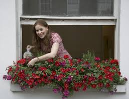 Plants For Winter Window Boxes - my great outdoors five women share their outdoor spaces with us