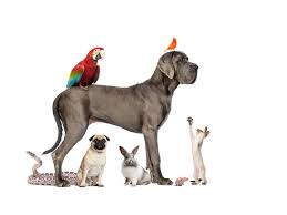 Small House Dogs Dogs Cats Birds And Bunnies In One House
