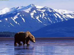 Perfect alaska vacations for every season travel blat