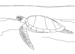 turtle coloring sheet parking advice pages sea print