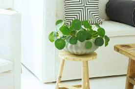 home interior plants beautiful indoor house plants that are also easy to maintain
