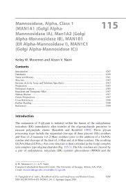 mannosidase alpha class 1 man1a1 golgi α mannnosidase ia