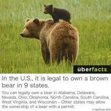Bear Meme - i wanna own a bear meme by aerikphantomhive memedroid