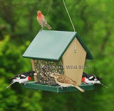 anyone setting up backyard bird feeders for the winter page 3