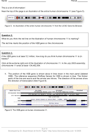worksheet 19 gene and chromosomal mutations answers the best and