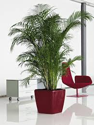 which tall potted plants are great for indoor use in shady areas
