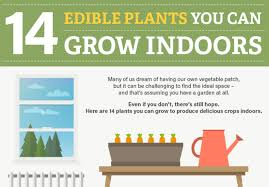 Winter Indoor Garden - infographic 14 edible plants that you can grow indoors