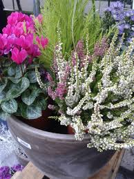 winter plants for pots container gardens for chilly weather hgtv