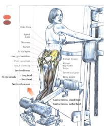 Muscles Used During Bench Press My Best Secrets To Train The Hamstrings Muscles U2013 Part 2