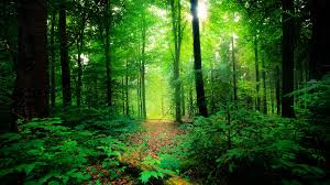 india could achieve 33 tree cover with new plan big think