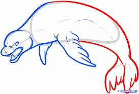 how to draw a leopard seal step by step sea animals animals