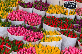Images Of Tulip Flowers - tiptoe through the tulips how to experience amsterdam in bloom