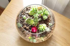 how to make a cactus terrarium with pictures ehow