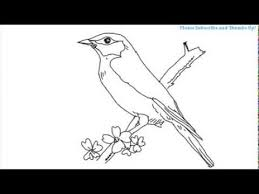 how to draw beautiful drawing how to draw a beautiful bird
