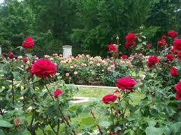 fertilizers soils sprays the redneck rosarian