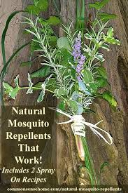 natural mosquito repellents natural mosquito repellents that work
