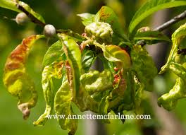Plants Diseases And Treatment - identify the disease on your plants