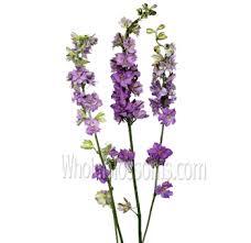wedding flowers lavender wholesale lavender wedding flowers bouquet