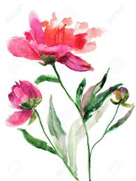 Peony Flowers Watercolor Illustration Of Beautiful Peony Flowers Stock Photo