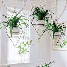 19 ways to design with houseplants sfgate