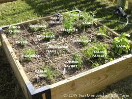 fall raised bed vegetable gardening for beginners beautiful