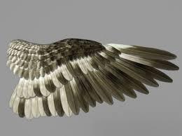 Bird Wing - bird wing development for computer graphics ncca