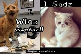Sad Kitty Meme - i win sweepstakes smart cat meme sweeps maniac
