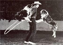 movies with australian shepherds las rocosa australian shepherds